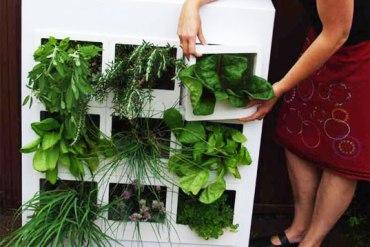 สวนผักแนวตั้งในคอนโด 24 - vertical garden