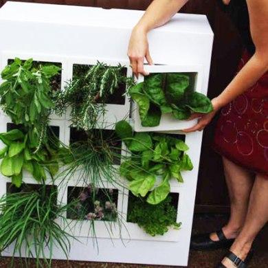 สวนผักแนวตั้งในคอนโด 16 - vertical garden