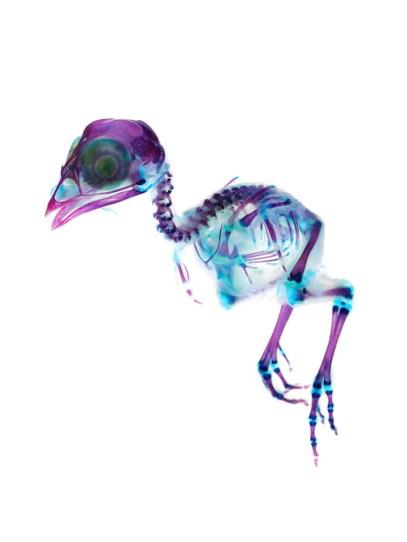Iori-Tomita-new-world-transparent-specimens-6