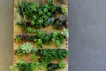DIY. RECYCLED PALLET สู่สวนแนวตั้ง 10 - DIY