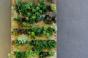 DIY. RECYCLED PALLET สู่สวนแนวตั้ง 19 - DIY