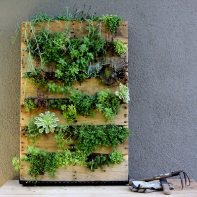 DIY. RECYCLED PALLET สู่สวนแนวตั้ง 15 - DIY
