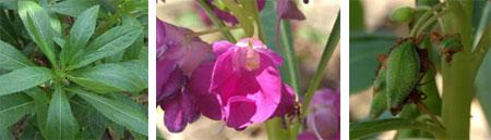 Thai herb รักษาน้ำกัดเท้ากัน 15 - Thai herb