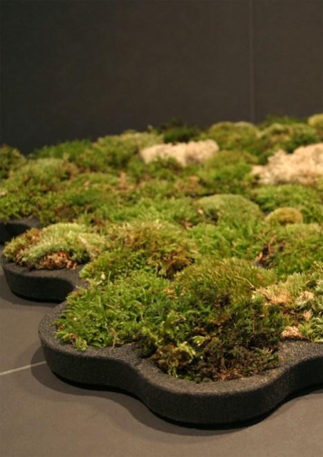 moss carpet3 สวนเล็กๆ ในพรมเช็ดเท้า ประจำห้องน้ำของคุณ