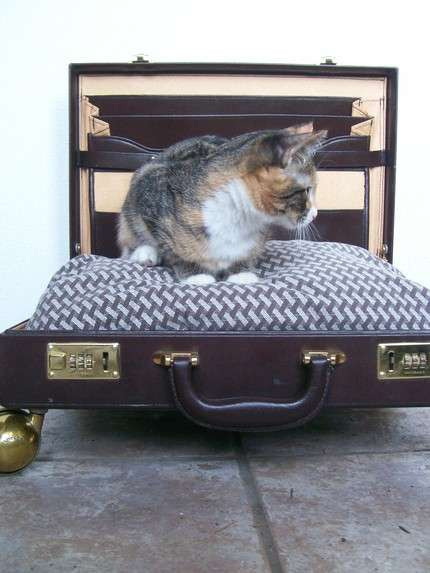 Pet's Bed-to-Go..เตียงนอนสัตว์เลี้ยงพร้อมเคลื่อนย้าย 16 - pet