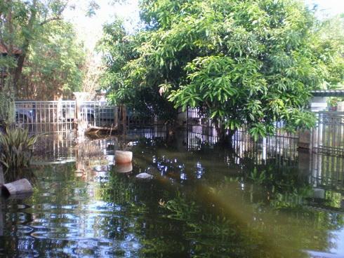 ช่วยชีวิตต้นไม้..หลังน้ำท่วม 14 - flood