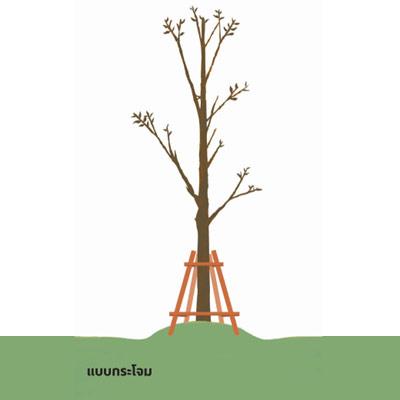 ช่วยชีวิตต้นไม้..หลังน้ำท่วม 17 - flood