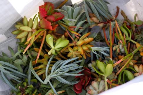 IMG 9714 DIY.Succulent Wreath ต้อนรับปีใหม่