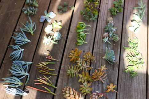 IMG 9720 DIY.Succulent Wreath ต้อนรับปีใหม่
