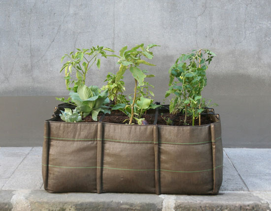 bac13 Bag for plants