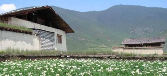 farm04 580x265 Shangrila Farms