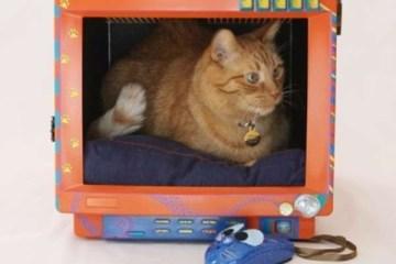 Cat bed...เตียงน้องเหมียวจากจอคอมพิวเตอร์เก่า(รุ่นโบราณ) 13 - รีไซเคิล