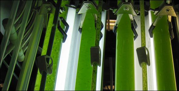 Algae 590 พลังงานจากสาหร่าย..อนาคตพลังงานของไทย