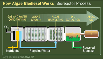 algae biodiesel 6 พลังงานจากสาหร่าย..อนาคตพลังงานของไทย