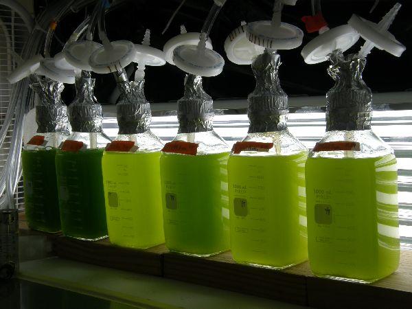 biofuel produced from algae 2ppgh พลังงานจากสาหร่าย..อนาคตพลังงานของไทย