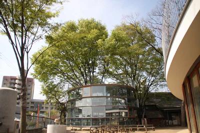 191 RING AROUND A TREE เพลินกายเพลินใจรอบๆต้นไม้