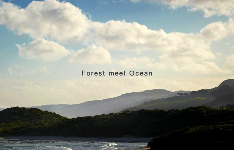 """""""Forest meets the Ocean"""" การตกแต่งบ้านฤดูร้อนแบบ """"ป่าไม้"""" นัดพบเจอกับ """"มหาสมุทร"""" โดย Robert Mills Architects 13 - Ocean House"""