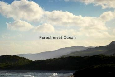 """Forest meets the Ocean"" การตกแต่งบ้านฤดูร้อนแบบ ""ป่าไม้"" นัดพบเจอกับ ""มหาสมุทร"" โดย Robert Mills Architects 16 - LIVING"