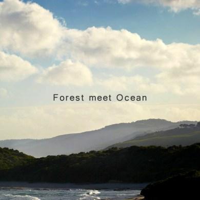 """""""Forest meets the Ocean"""" การตกแต่งบ้านฤดูร้อนแบบ """"ป่าไม้"""" นัดพบเจอกับ """"มหาสมุทร"""" โดย Robert Mills Architects 57 - Ocean House"""