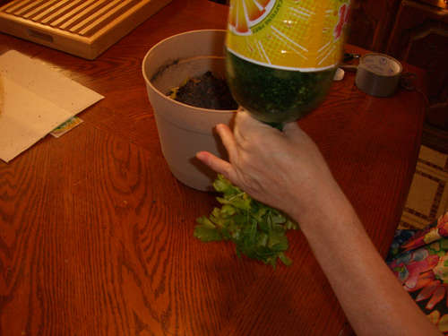 Untangle Your Plant D.I.Y. กระถางกลับหัวจากขวดพลาสติกใช้แล้ว