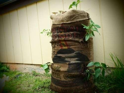 Garden Sack สวนกระสอบ...ปลูกผักสวนครัว แบบไม่ต้องการพื้นที่ 13 - Garden sack