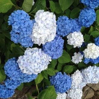 Clear blue & white