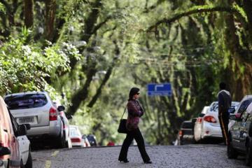 """ถนนสายต้นไม้ ที่ประเทศบราซิล """"Rua De Carvalho Goncal"""" 14 - tree"""