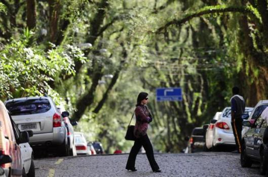 """ถนนสายต้นไม้ ที่ประเทศบราซิล """"Rua De Carvalho Goncal"""" 3 - tree"""