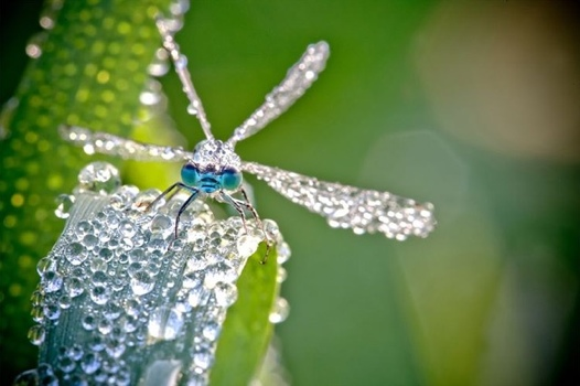 25550922 083311 ภาพ macro ชีวิตเล็กๆท่ามกลางหยดน้ำค้าง โดย David Chambon