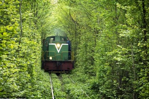 25550926 235844 อุโมงค์สีเขียว.. อุโมงค์แห่งรัก.. เส้นทางในธรรมชาติสำหรับรถไฟ และคนรักกัน..ที่สุดแสนโรแมนติก