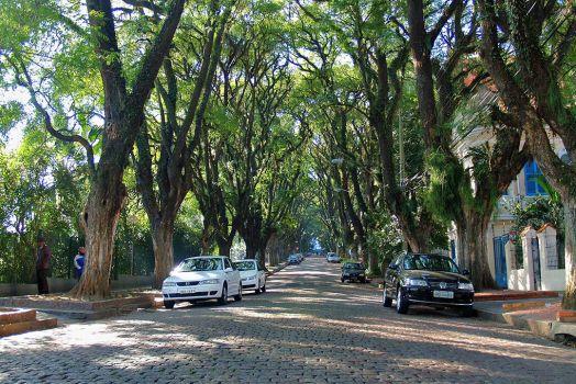 """ถนนสายต้นไม้ ที่ประเทศบราซิล """"Rua De Carvalho Goncal"""" 18 - tree"""