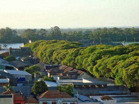 """ถนนสายต้นไม้ ที่ประเทศบราซิล """"Rua De Carvalho Goncal"""" 16 - tree"""