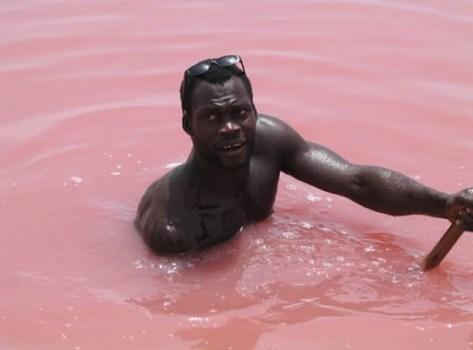 pink retba lake 3 473x350 Strawberry Milkshake Lake @Retba ทะเลสาบนมเย็น