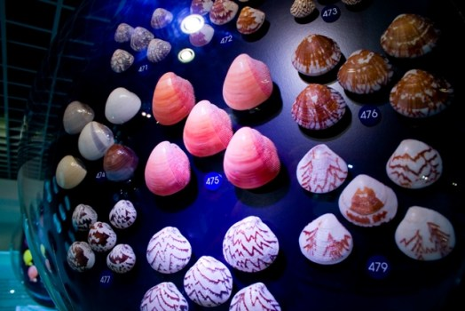 1275228 524x350 Bangkok Seashall Museum สู่โลกมหัศจรรย์ของเปลือกหอย ณ ถนนสีลม