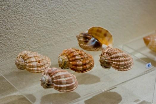 1276172 524x350 Bangkok Seashall Museum สู่โลกมหัศจรรย์ของเปลือกหอย ณ ถนนสีลม
