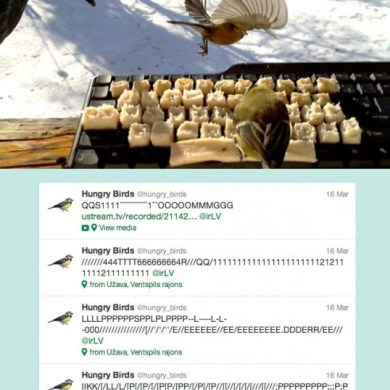 AMAZING! Real birds tweet on twitter 16 - hungry bird