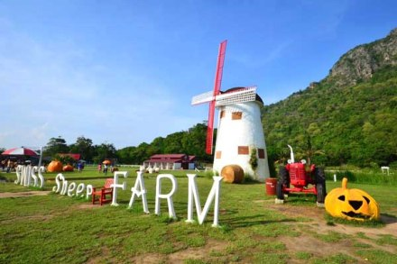 Swiss Sheep Farm (16)