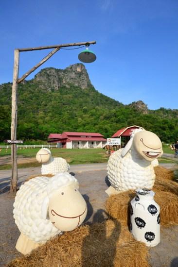 Swiss Sheep Farm (23)