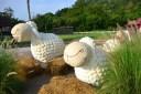 %name Swiss Sheep Farm..ฟาร์มแกะที่ชะอำ