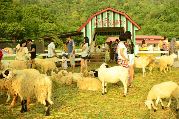 Swiss Sheep Farm 27 Swiss Sheep Farm..ฟาร์มแกะที่ชะอำ