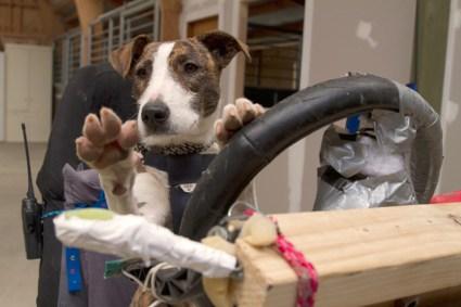 driving dogs สอนน้องหมาขับรถ 19 - cars