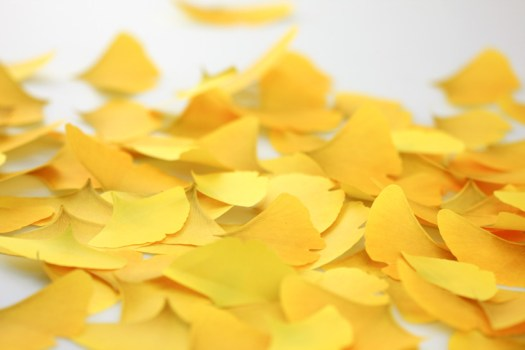 gingko02 525x350 กระดาษโพสต์ อิท ที่ร่วงโรย Cherry blossom memo stickers by appree