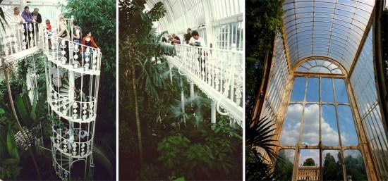 Palm House at Kew Garden ศูนย์รวมปาล์มจากทั่วโลก 18 - Palm House at Kew Garden