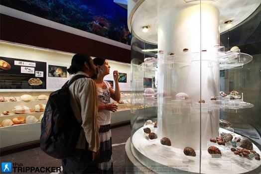thetrippacker_bkk_bangkok_seashell_museum_n_003