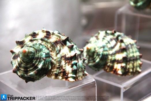 thetrippacker_bkk_bangkok_seashell_museum_n_036