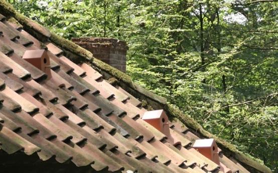 25560105 154430 เปลี่ยนหลังคาบ้าน เป็นบ้านนก ด้วยกระเบื้องมุงหลังคาเซรามิคบ้านนก