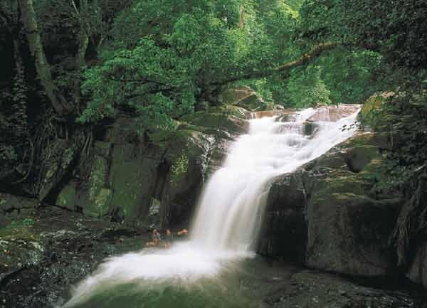25560109 083124 เที่ยวน้ำตก ชมผีเสื้อ ดูช้างป่า ที่ป่าละอู ..ใกล้ๆหัวหิน