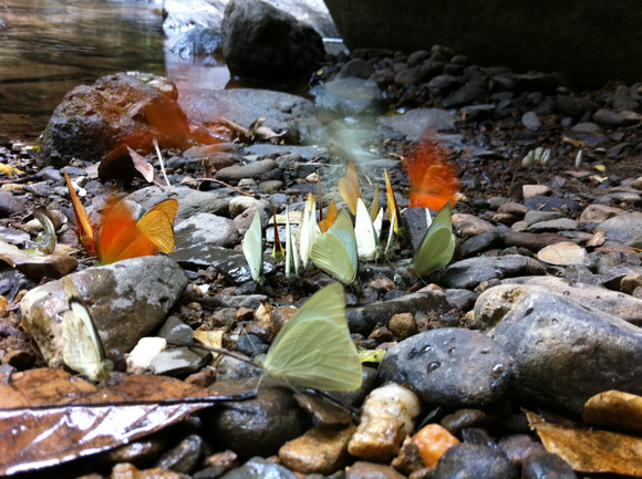 IMG 2011 resize1 เที่ยวน้ำตก ชมผีเสื้อ ดูช้างป่า ที่ป่าละอู ..ใกล้ๆหัวหิน