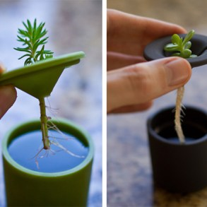 Rootcup ปลูกพืชแนวใหม่ 23 - cup