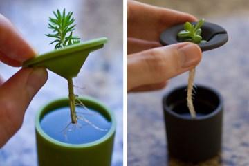 Rootcup ปลูกพืชแนวใหม่ 4 - water